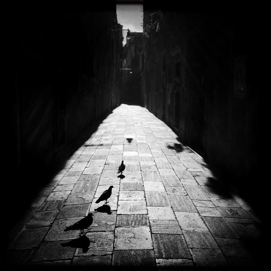 pigeons-venice_33052479382_o