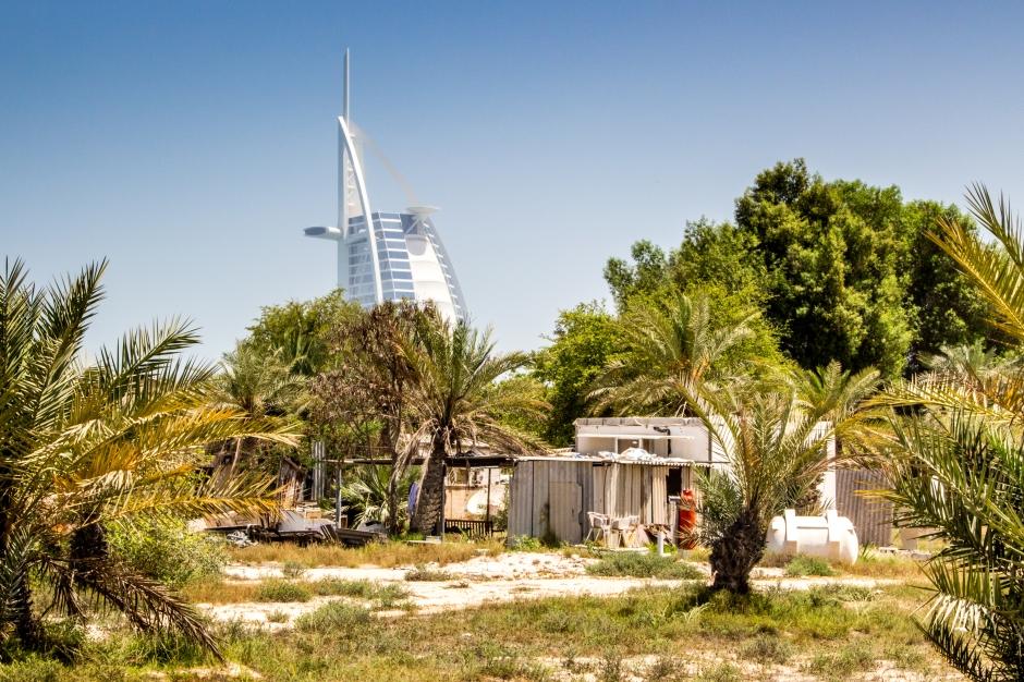 Date farm oasis Dubai